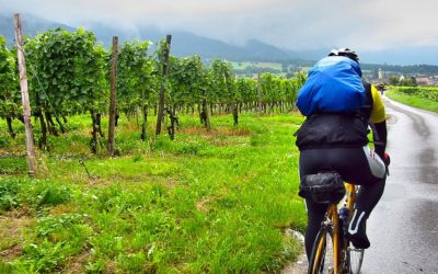 penedes cycling and wine tasting